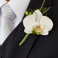 Phalaenopsis Orchid Boutonniere in Chicago at Crystal Flower Shop