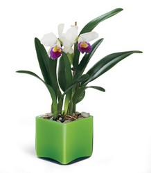 Irresistible Orchid Planter in Chicago at Crystal Flower Shop