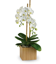 Teleflora's Opulent Orchids in Chicago at Crystal Flower Shop