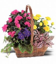 Blooming Garden Basket in Chicago at Crystal Flower Shop