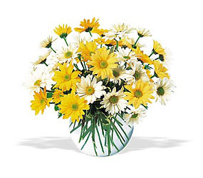 Dashing Daisies Roses Bouquet for  Chicago Delivery Same Day
